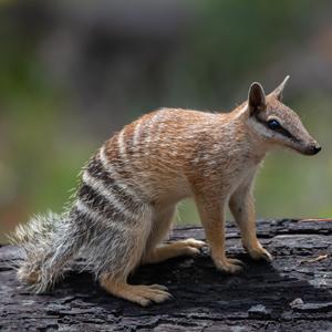Tone-Perup Nature Reserve